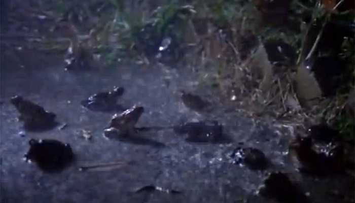 frogs rained-Netmarkers