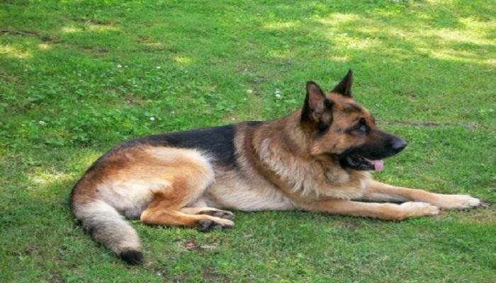 dog police-Netmarkers