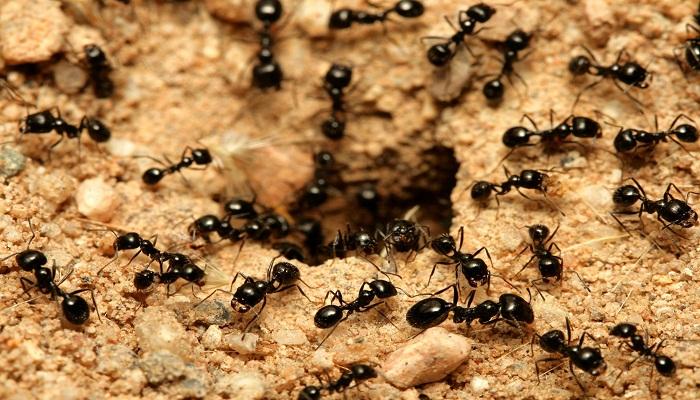 ants_Netmarkers