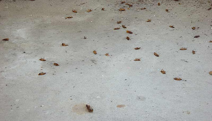 dead roaaches-Netmarkers