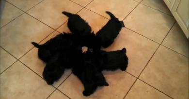 Trending, Video of puppies eating food got viral- Viral Animal videos
