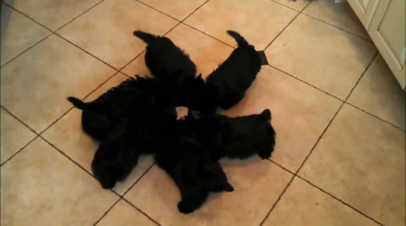 Trending, Video of puppies eating food got viral- Viral Animal videos