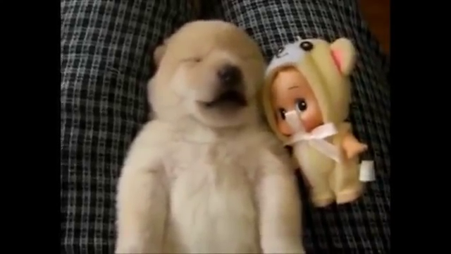 Video of a cute puppy sleeping in the most amazing way gone viral and is trending