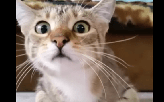 Video with Cat's expressions watching a movie goes viral- Netmarkers
