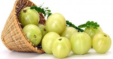 amla benefits-Netmarkers
