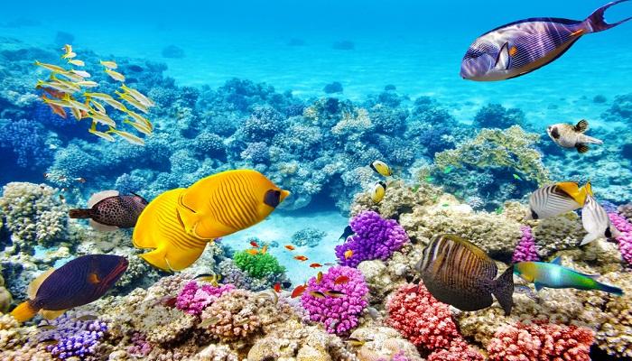 Great Barrier Reef-Netmarkers