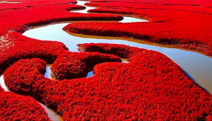 Red Beach, China-Netmarkers