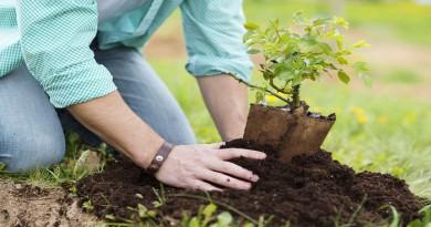 plant-a-tree-Netmarkers