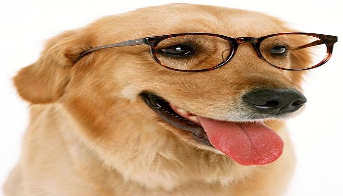 smart dogs-Netmarkers