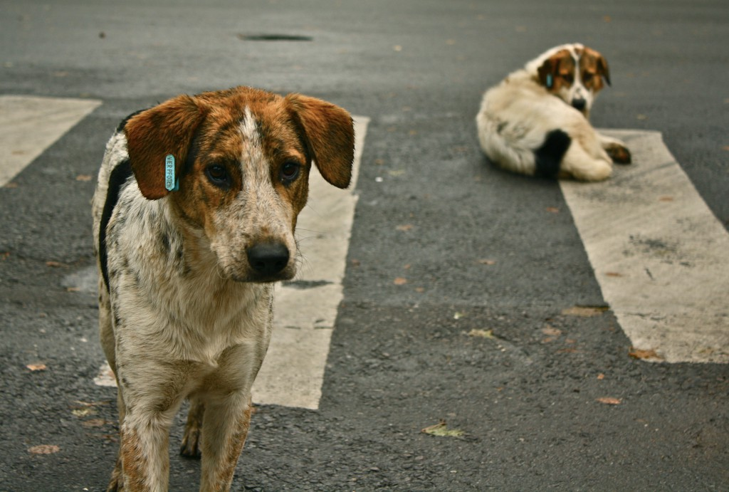 stray dogs can teach us a lot- Netmarkers