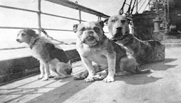 titanic-dogs-Netmarkers