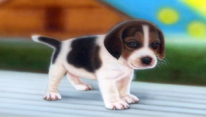 Beagle-Netmarkers