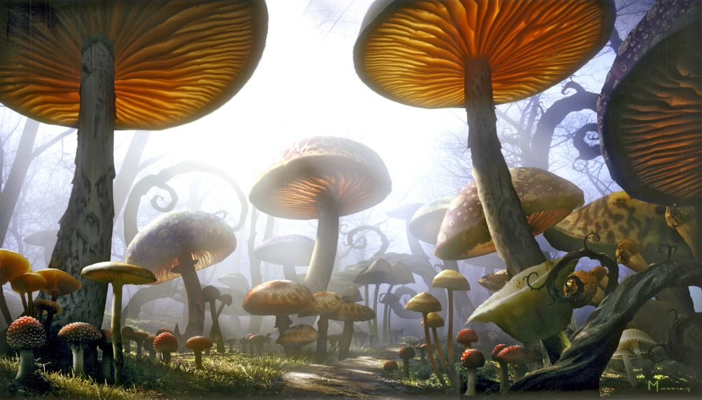 Big mushrooms existed before trees on Earth- Netmarkers