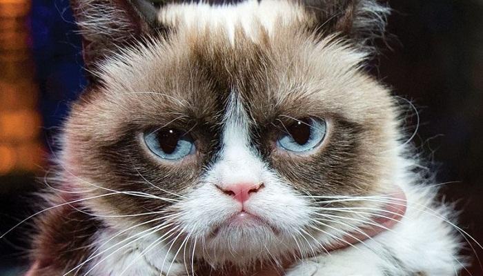 Grumpy cat YouTube star-Netmarkers