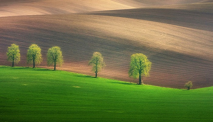 nature-photography-moravian-fields-Netmarkers