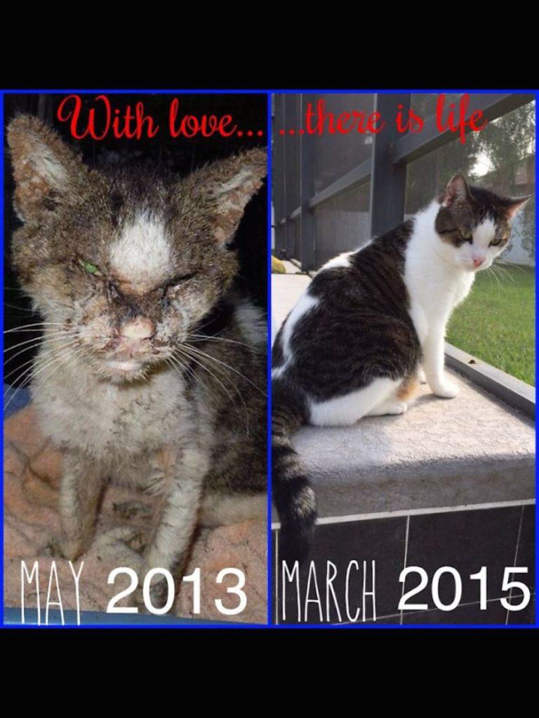 Love cats- Netmarkers