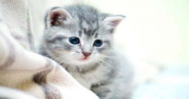 beautiful cat-Netmarkers