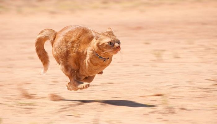 cats run very fast-Netmarkers