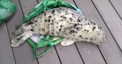 people taking baby seals to home for giving death- Netmarkers