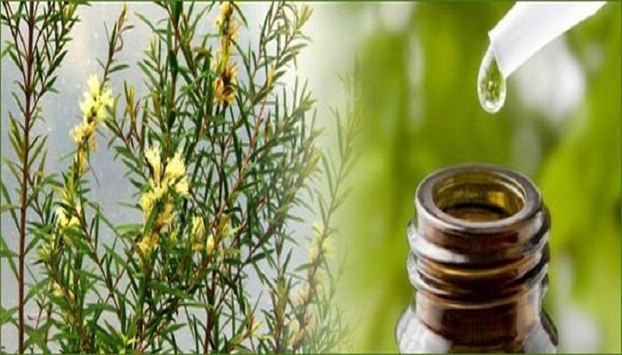 tea tree oil for acne-Netmarkers