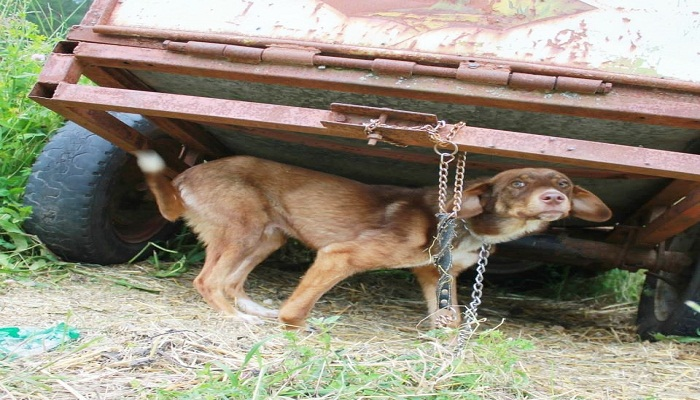 A puppy is chained-netmarkers