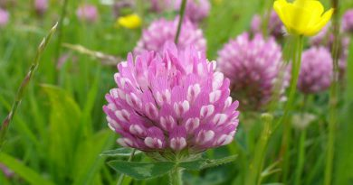 red-clover-netmarkers