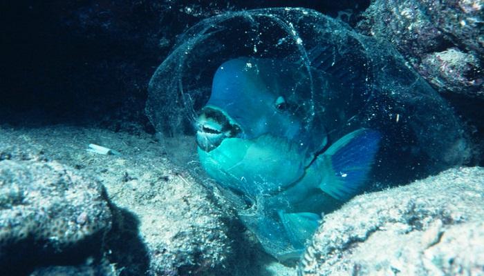 parrotfish-netmarkers