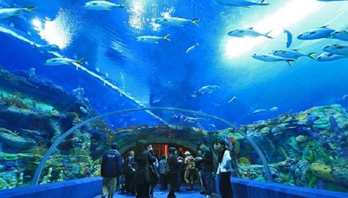 aquarium-of-western-australia-perth-netmarkers
