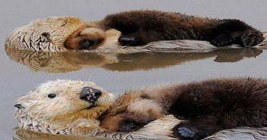 otters-netmarkers