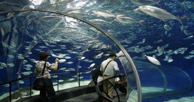 shanghai-ocean-aquarium-shanghai-netmarkers