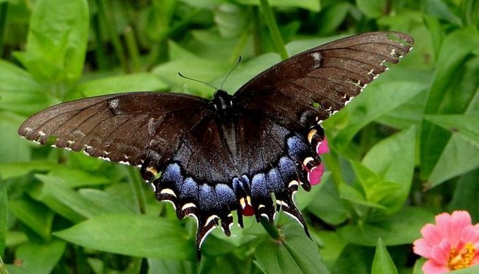 the-dead-leaf-butterfly-netmarkers