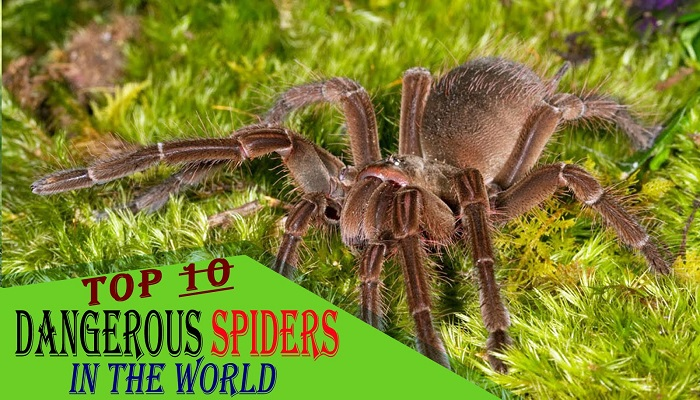 10-highly-dangerous-spiders-of-the-world-netmarkers