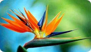 bird-of-paradise-netmarkers