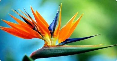 bird-of-paradise-netmarkers