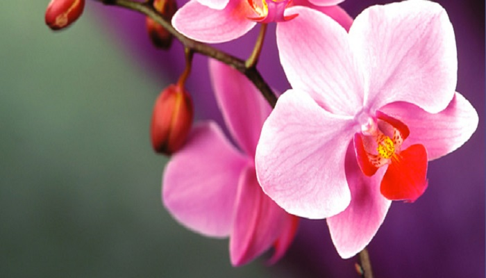 orchids-netmarkers