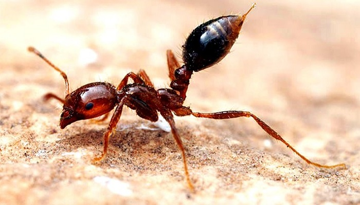 10-most-extreme-insect-species-netmarkers