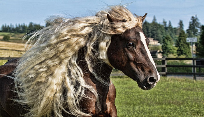 black-forest-horse-netmarkers