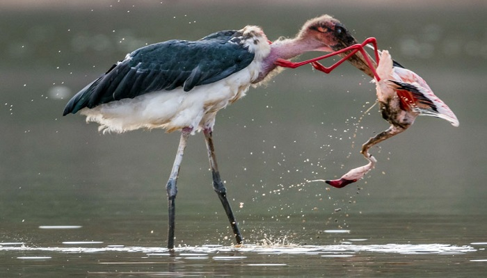marabou-stork-netmarkers
