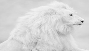 white-lion-netmarkers