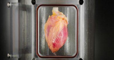 heart-cut-netmarkers