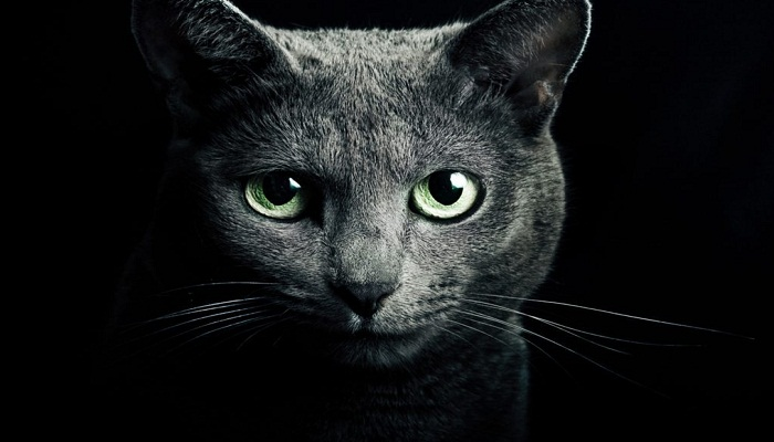 cats-can-protect-from-curse-and-evil-eye-netmarkers