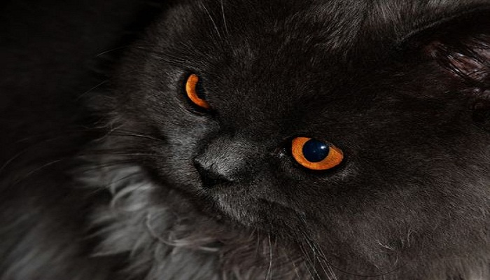 cats-possess-powers-to-confront-spirits-netmarkers