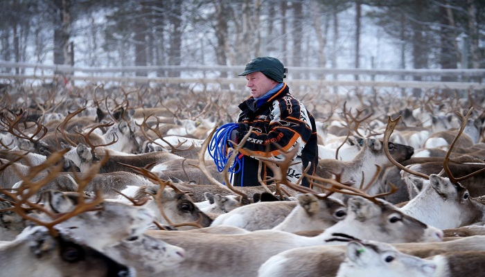 reindeer-norway-netmarkers