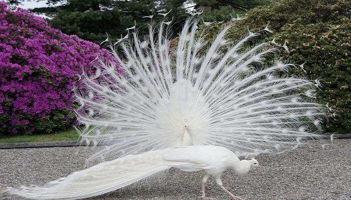 peacock-2-netmarkers