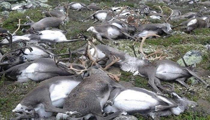reindeer-chernobyl-netmarkers