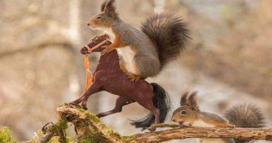 squirrel-2-netmarkers