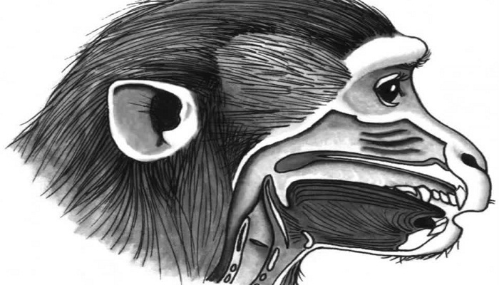 why the monkeys can't talk-Netmarkers