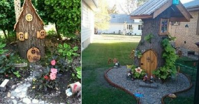 Convert-your-tree-stump-into-a-fairy-house-Netmarkers