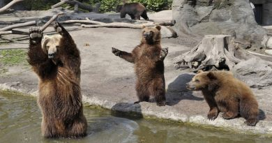 playing-bears-Netmarkers