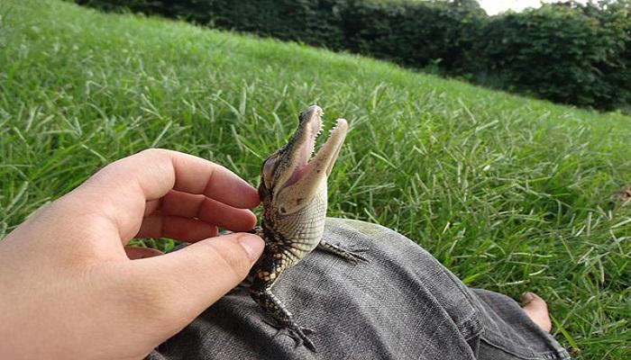 baby crocodile netmarkers